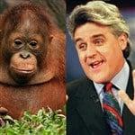 Jay Leno Rapes Orangutan