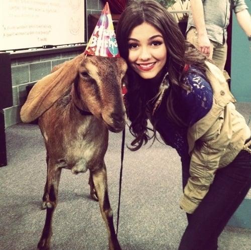 Victoria Justice goat