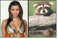 Kim Kardashian accused of setting baby raccoon on fire
