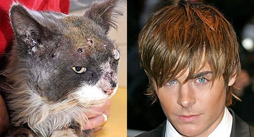 Zac Efron shot an Australian cat named Smokey 13 times in the head with an air rifle, but the cat still found his way home after this vicious act of animal cruelty.